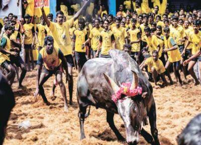 Madurai Avaniyapuram Jallikattu started today