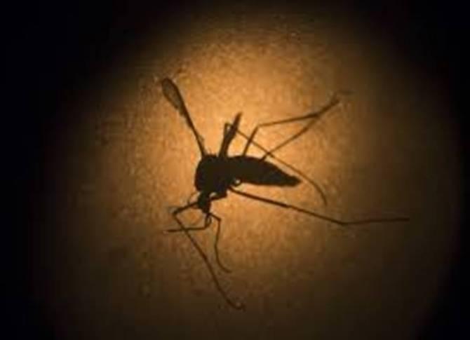 dengue fever, Tamilnadu government, minister vijayabhaskar,TN Health department