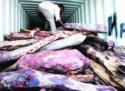 Red sanders, Andhra Pradesh, Red sanders smuggler, Red Sandal Wood,