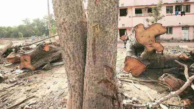Tree cutting for development