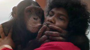 Gorilla Teaser, கொரில்லா