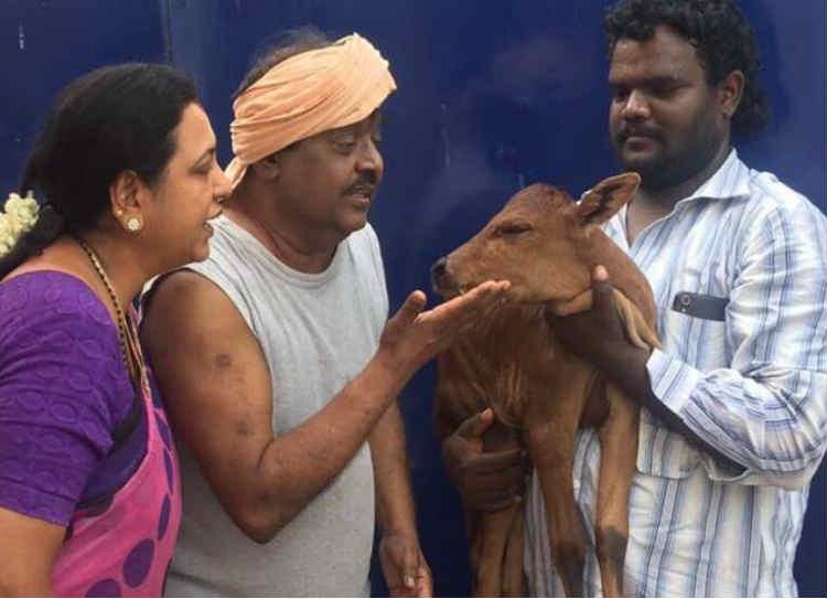 cow missing in vijayakanth house, விஜயகாந்த்