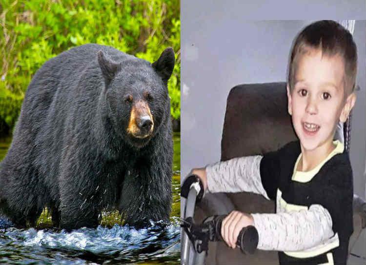 bear protects 3 year old boy, கரடி