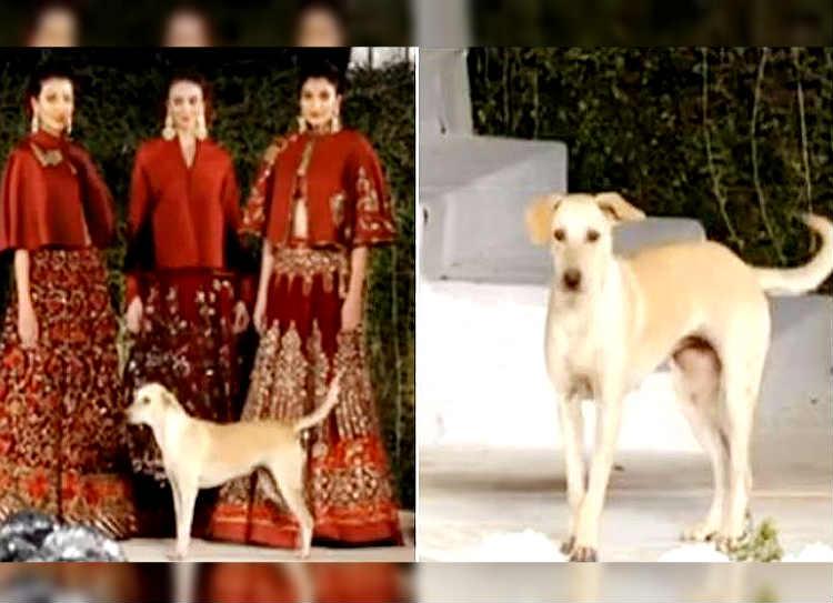 viral video - mumbai fashion show, பேஷன் ஷோ