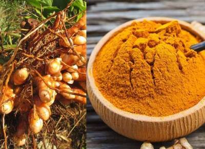 Erode turmeric receives Geographical Indication tag