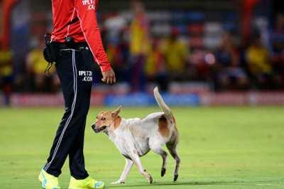 IPL 2019 Chinnaswamy Stadium