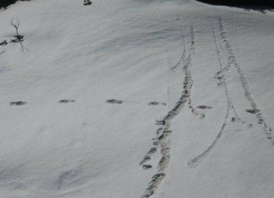 Himalayan Yeti Myths