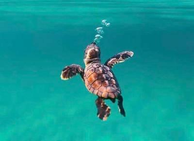 World Turtle Day 2019 : டர்டாய்ஸ்க்கும் டர்ட்டிலுக்கும் என்ன வித்தியாசம்னு உங்களுக்கு தெரியுமா?