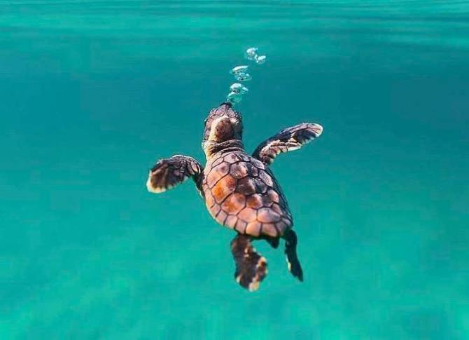 World Turtle Day 2019, How turtles are different from tortoises