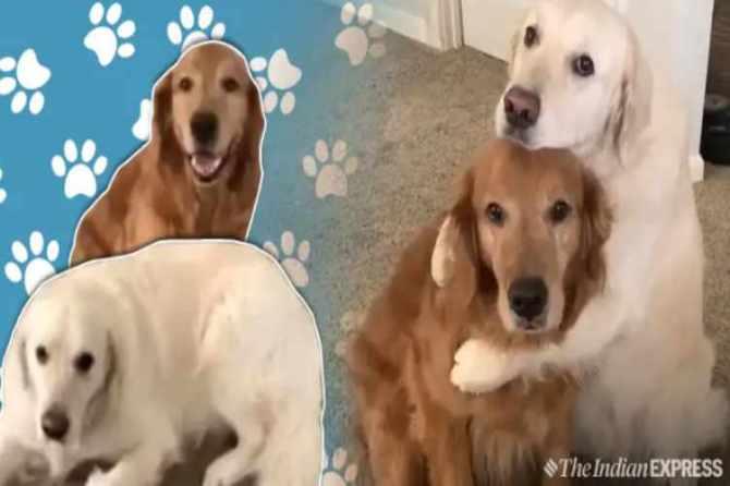 dog, food, apologise, viral, video, நாய், உணவு, மன்னிப்பு, வைரல், வீடியோ