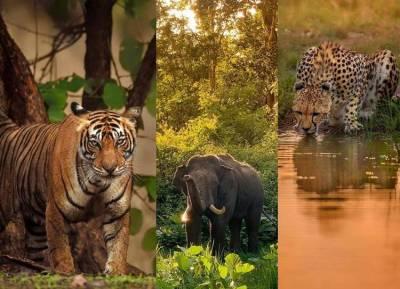 Uttarkhand's Jim Corbett Tiger Reserve