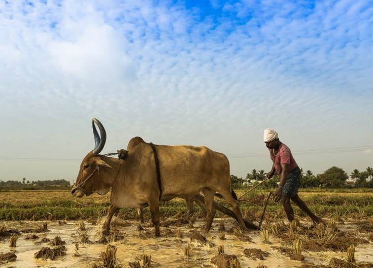 Global warming impacts Indian employments