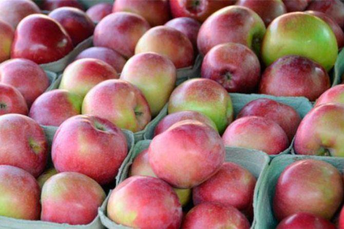 apple tips