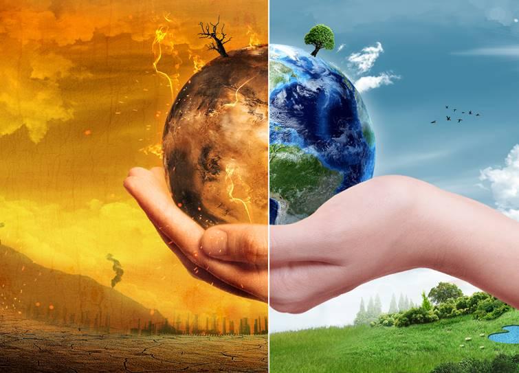 Global warming forest restoration