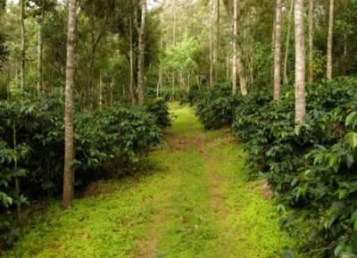 TNFUSRC Recruitment 2019 Direct Recruitment for Forest Watcher post - காடுகளை ஆள செல்வோமா? வனக்காவலர் பணியிடங்களுக்கு நேரடி நியமனம்! முழு விவரம் இதோ