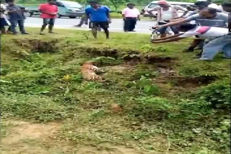 west bengal leopard attack, புகைப்படம் எடுத்தவரை தாக்கிய சிறுத்தை, மேற்குவங்கத்தில் சிறுத்தை தாக்குதல், Alipurduar leopard attack viral video, Alipurduar man attacked by leopard, west bengal news, kolkata city news