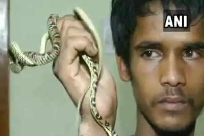 flying snake,wildlife protection act,Bhubaneswar
