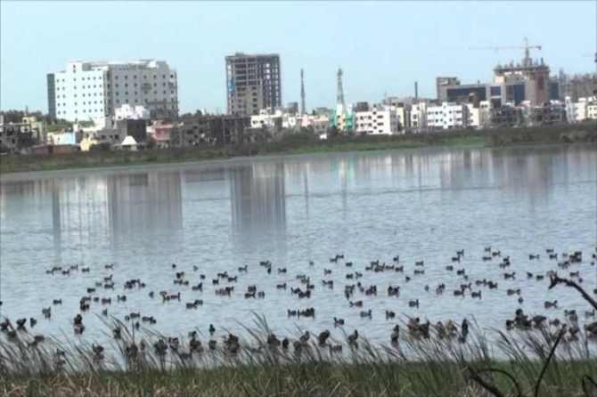 chennai high court, pallikaranai marshland, encroachment
