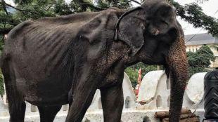 srilanka elephant photo viral