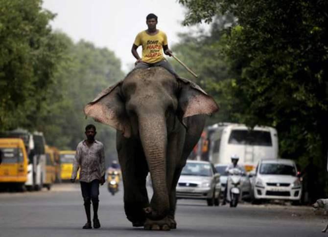 Lakshmi Elephant, Yusuf Ali