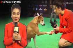iifa awards in mumbai, 20th edition iifa awards, iifa awards, dog iifa awards, iifa awards winner list, aditi bhatia, சர்வதேச இந்திய திரைப்பட விருதுகள், அதிதி பாட்டியா, dog viral video, trending, aditi bhatia interview a dog, Tamil indian express news