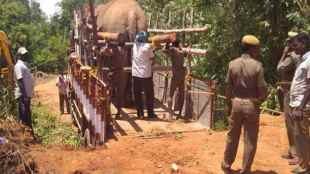 Forest officials accused of beating elephants,marakkanam Elephant incident
