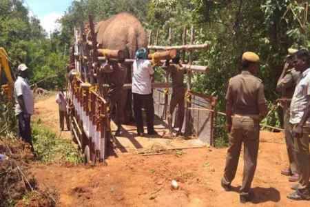 Forest officials accused of beating elephants,marakkanam Elephant incident