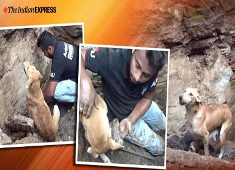 viral video dog digging her puppies out of debris leaves netizens emotional - கண்கள் ஓரம் நீர் கசிய வைக்கும் வீடியோ: குட்டிகளை காப்பாற்ற கடைசி வரை போராடிய நாய்