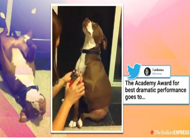 Dog's dramatic reaction when owner tries to trim its nails goes viral video - இனிமே நாயே-ன்னு திட்டுனா நமக்கு ஒர்த் தான்... ஏன் தெரியுமா? வீடியோ பாருங்க