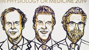 2019 Nobel Prize winners for medicine announced