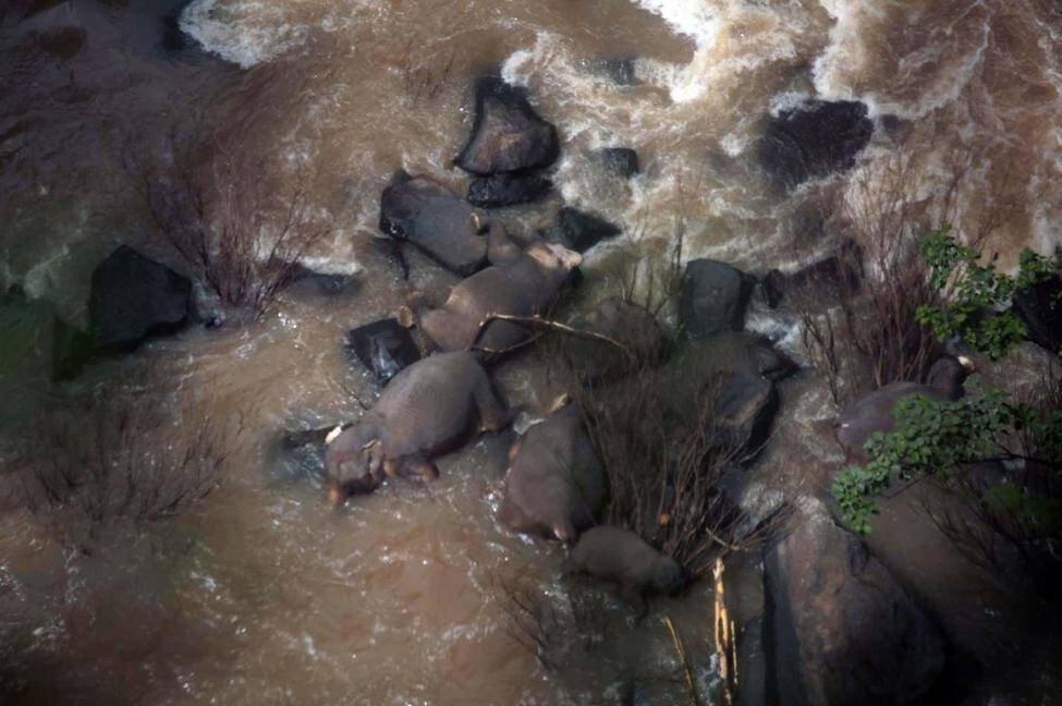 Thailand baby elephant drowned in a waterfall