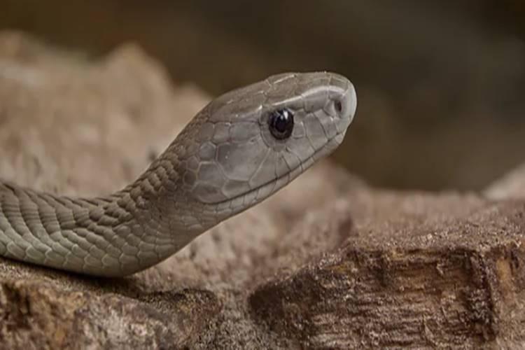 how to avoid snakes from our home - பாம்புகளை வீடுகளிலிருந்து அப்புறப்படுத்தும் வழிகள்