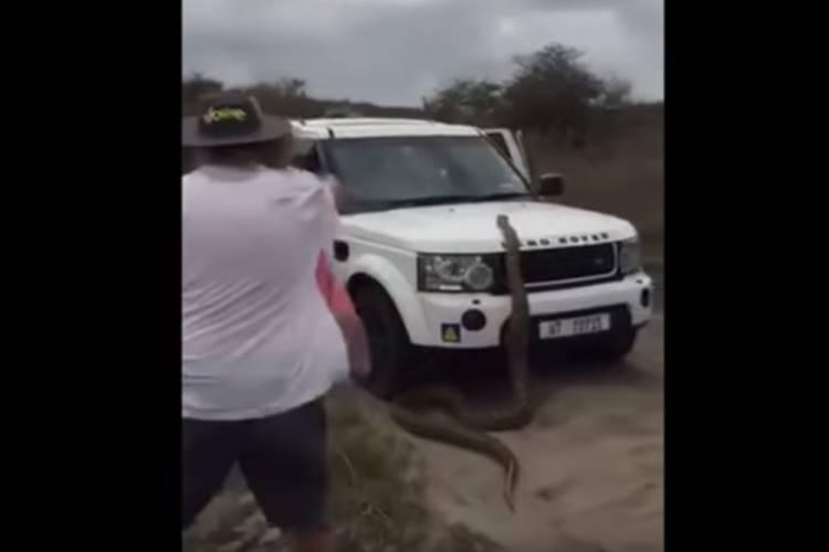 17-foot python chases tourists car video goes viral - காரின் மீது ஏறிய 17 அடி மலைப் பாம்பு... அலறிய பயணிகள் - வீடியோ