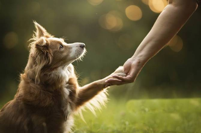 risk of death following hospitalization lower for dog owners, american heart association