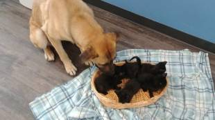 Stray dog saved five kittens from cold