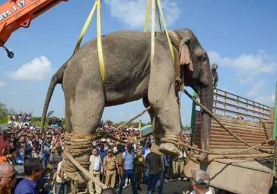 Krishna elephant dies of cardiac arrest in Assam