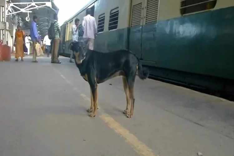 chennai, chennai suburban train, chennai park railway station, Park Town railway station,Chennai railway station,Chennai dog, railway police