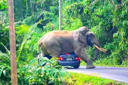 thailand, elelphant, car, national park, vieo, viral, tourists, social network
