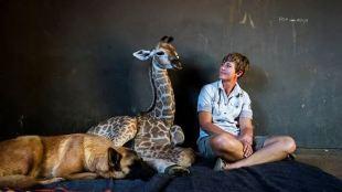 Dog befriends orphan baby giraffe in South Africa