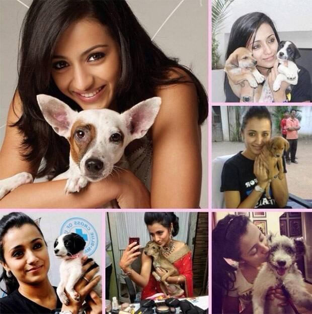 Celebrities with their pet dogs
