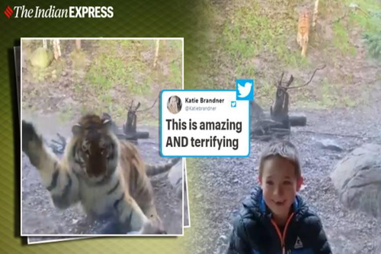 Tiger 'attacks' little boy at Dublin Zoo, leaves many terrified online - விலங்குகள் பூங்காவில் சிறுவனை 'தாக்கிய' புலி - பார்ப்போரை நடுங்க வைக்கும் வீடியோ