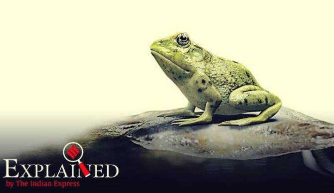 What is mean by FrogPhone - 'FrogPhone' என்றால் என்ன?