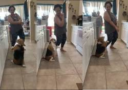 Dog dance moves viral trending video of the day
