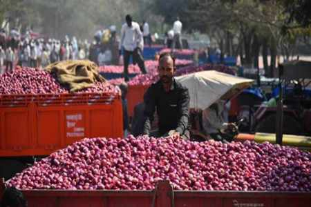 onion price, onion prices india,onion prices in chennai koyambeu , onions, onion exports,today inion price in chennai
