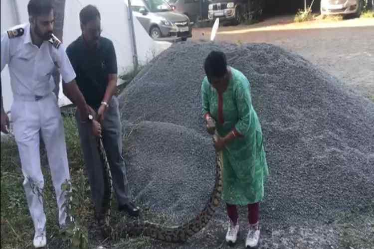 Woman caught python, Woman caught 20kg python alive, மலைப்பாம்பை உயிருடன் பிடித்த பெண், வைரல் வீடியோ, Woman caught 20kg python in Ernakulam, Woman captures python alive, Woman caught python viral video