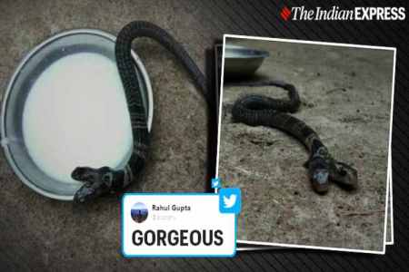 two-headed snake, snakes, west bengal, genetic mutation, trending, indian express news