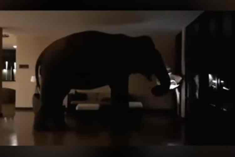 Elephant entered into star hotel, ஹோட்டலுக்குள் நுழைந்த யானை, இலங்கை ஹோட்டலுக்குள் நுழைந்த யானை, யானை வைரல் வீடியோ, யானை வீடியோ, wild elephant entered into star hotel in Srilanka, elephant viral video, elephant borken funiture in star hotel, elphant, srilanka star hotel, sri lanka