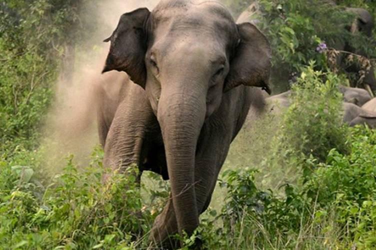 Elephant kills woman trekking inside Coimbatore forest