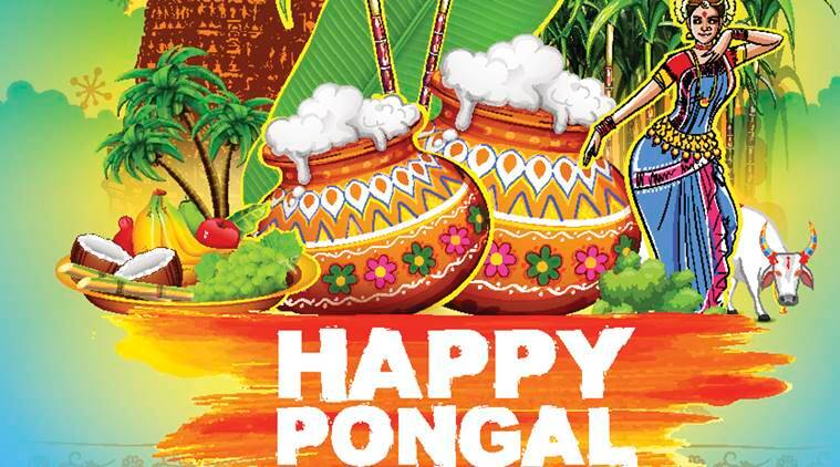 Thai Pongal 2020 Wishes: Best Pongal SMS, WhatsApp, Facebook messages