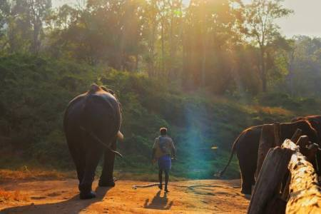 Anamalai tiger reserve kozhikamuthi elephants camp trains captive elephants